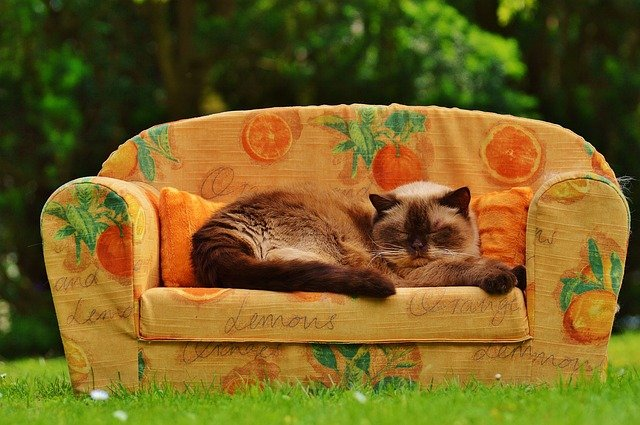 kočičí relax
